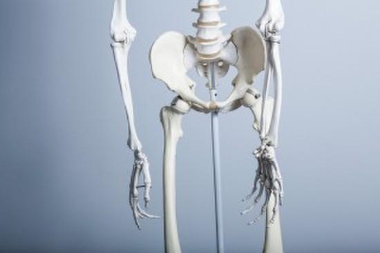 骨盤のイメージ写真