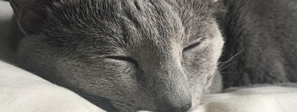 更年期の「不眠」を改善するには?