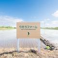 今年も無農薬栽培米の生育が始まりました
