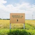 今年もたくさんの無農薬栽培米を収穫できました。