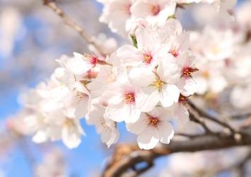 春の揺らぎの原因は●●不足と●●●機能の低下。