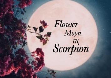 【蠍座満月】フラワームーン~おうち時間で女性にとって大切なケアのタイミングです