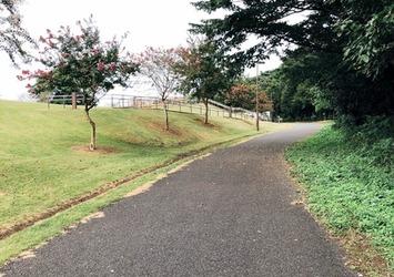 【今日も歩こう!たかが散歩。されど散歩。】