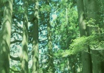 ウッド系、木の香りの香水・フォーミュラX